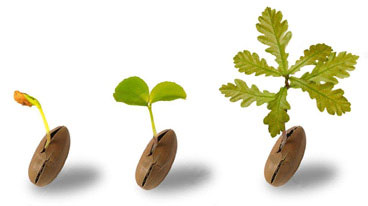 Crescita personale , Counseling e Meditazione
